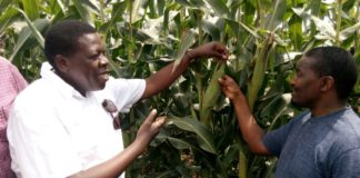 Devolution CS Eugene Wamalwa (left) and Agriculture CS Mwangi Kiunjuri (right) at Loyapat Irrigation Project in Turkana County. FILE PHOTO