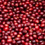 Coffee farmers in Bungoma have called on the county government to provide subsidized fertilizer