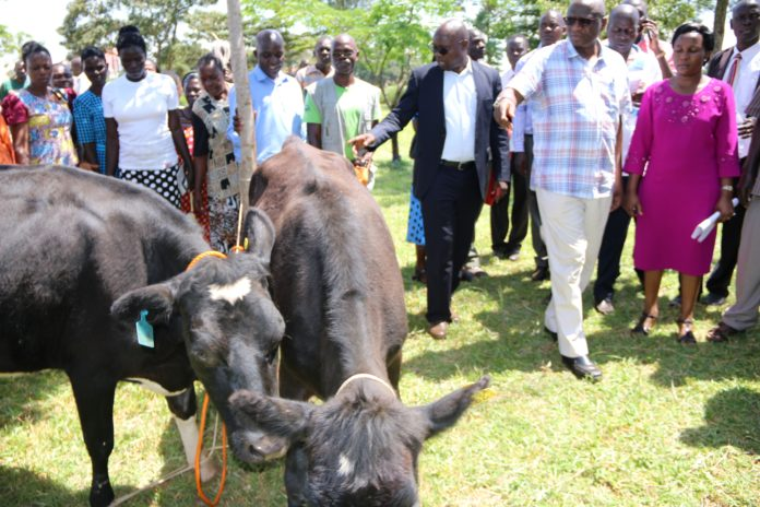 Busia County government has donated dairy animals to farmers in the county