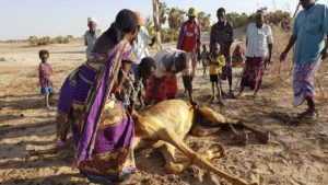 The drought that hit the region has been highlighted as the major cause of the food shortage currently being experienced