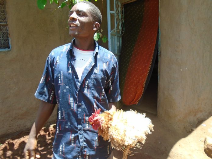 Mr. Ben Omega carrying the hen that has developed features of a cock