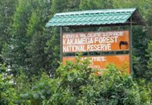 Kenya Forest Service has refuted claims that Kakamega Forest is facing depletion