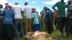 Residents gathered at the scene of the incident next to one of the carcasses