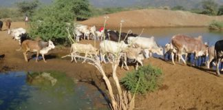 The drought has affected livestock, with residents forced to travel long distances to get water and pasture