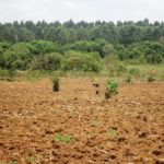 A section of tilled land in Lugari forest ready for tree planting