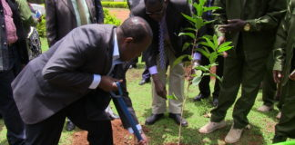 Bungoma County Environment CEC Renson Makheti plants a tree at Maeni