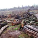 The national government imposed a countrywide 90-days logging ban in February
