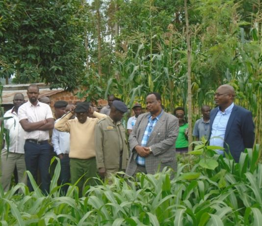 Livestock PS Harry Kimutai (right) on one of the farms in Lugari