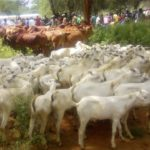 The West Pokot County administration has embarked on a programme targeting improvement of animal breeds