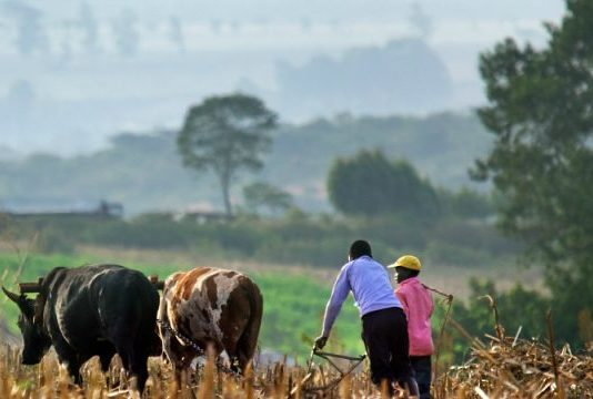 The Western Kenya region has been an agriculture stronghold and its agricultural practices must also be reinvented according to technological advances(PHOTO/AFK Travel)