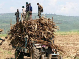 Kakamega Governor Oparanya has urged the government to start paying sugarcane farmers