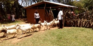 Joel Chumang'ole has gained a lot from rearing Galla breed of goats