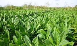 Tobacco industries have been urged to adhere to the Tobacco Control Act