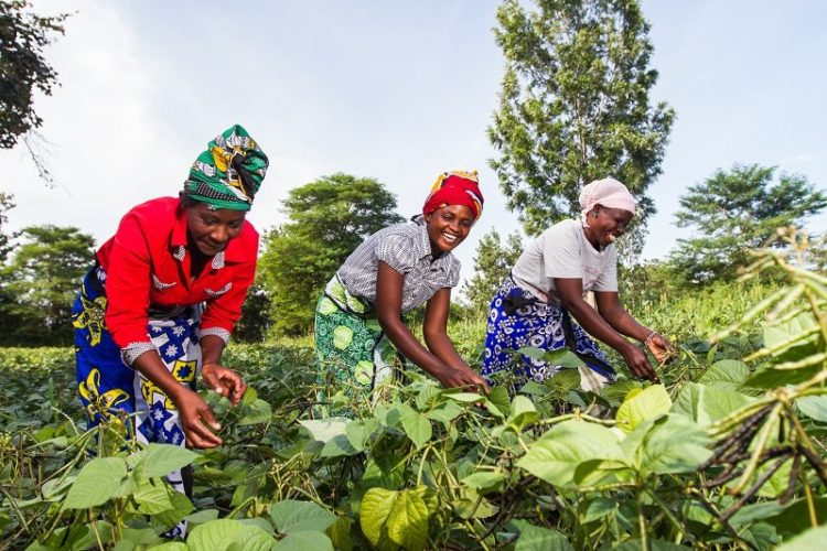 Farming is the sure way of getting substantial economic gains in the Counties of the former Western Province