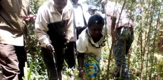 Mrs. Elizabeth Bunoro together with the officers uprooting the cannabis