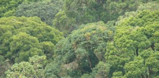 West Pokot government has launched a tree planting program in an effort to conserve the environment