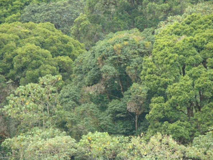 The Counties of the former Western province should do more to conserve the environment