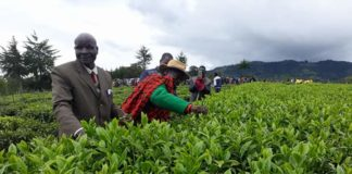West Pokot County government has embarked on an ambitious program to revive cash crop farming