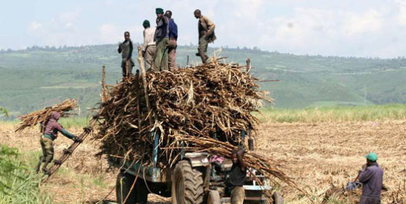 The sugarcane sector has faced its share of problems in the past years