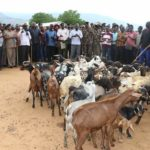 West Pokot, Turkana leaders checking the returned goats