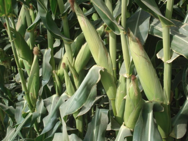 County governments must empower farmers to improve farm yields