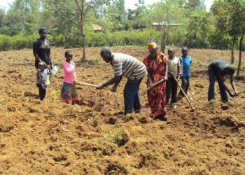 Farmers from Lurambi working on the farm