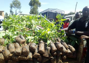 Vihiga farmers have been urged to also embrace avocado farming, since a market has been opened in China after the deal signed between the government and the Chinese government