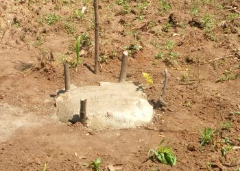 The cemented grave where Mr. Omulai buried the hen