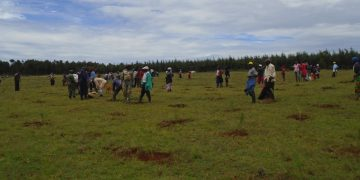 Members of Nzoia Community Forest Association during the tree planting exercise in Nzoia forest