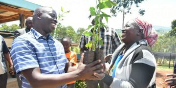 Nandi Governor Stephen Sang issuing coffee seedlings